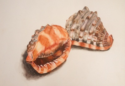 Kayla, Shells, mixed media. Approx A3
