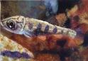 "Andrea Whitin, ""Fish"", Acrylic on Paper"